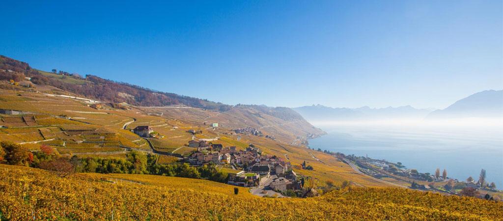 入选UNESCO世界遗产的拉沃葡萄园梯田